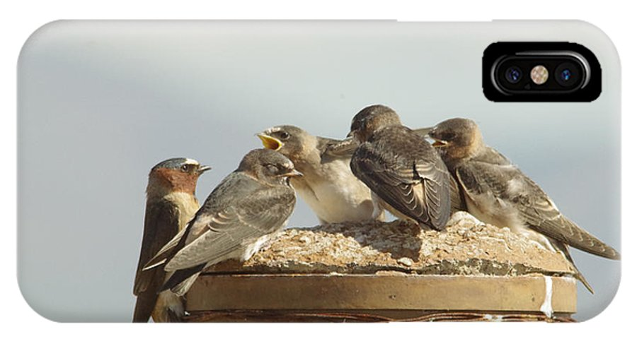 Birds IPhone X Case featuring the photograph Chirping Swallows by Jeff Swan