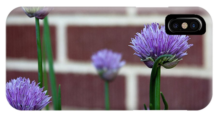 Flowers IPhone X / XS Case featuring the photograph Chive Talkin' by Elizabeth Richardson