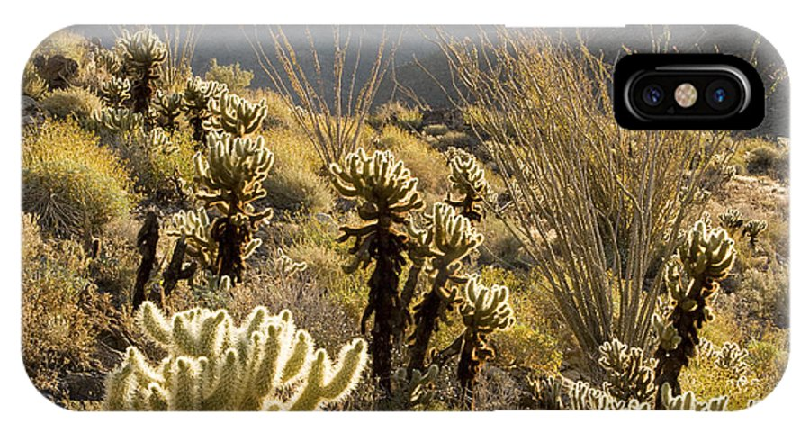 Nobody IPhone X Case featuring the photograph Cholla Cactus And Ocotillo Plants by Tim Laman