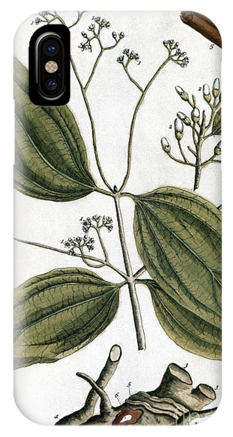 1730s IPhone X Case featuring the photograph Cinnamon Tree, 1735 by Granger