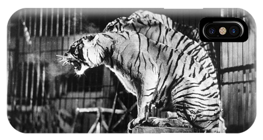 1930 IPhone X Case featuring the photograph Circus: Tigers by Granger
