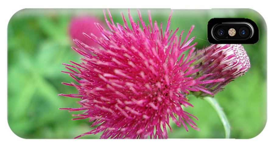 Thistle IPhone X Case featuring the photograph Cirsium Burgandy Thistle by Susan Baker