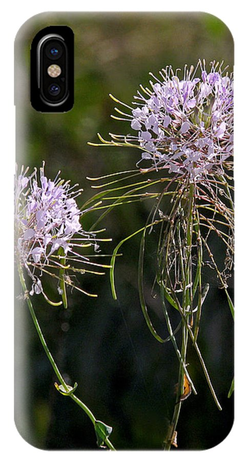 Nature IPhone X Case featuring the photograph Clasping Warea by Peg Urban