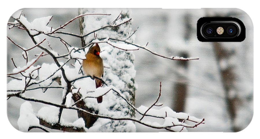 Cardinal IPhone X Case featuring the photograph Classic Cardinal In Snow by Douglas Barnett