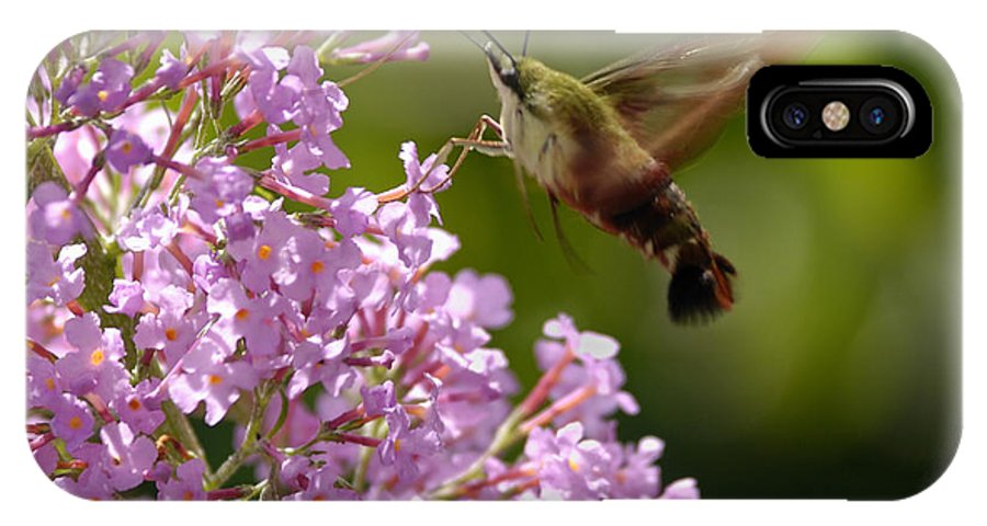 Hummingbird Clearwing IPhone X Case featuring the photograph Clearwing Pink by Randy Bodkins