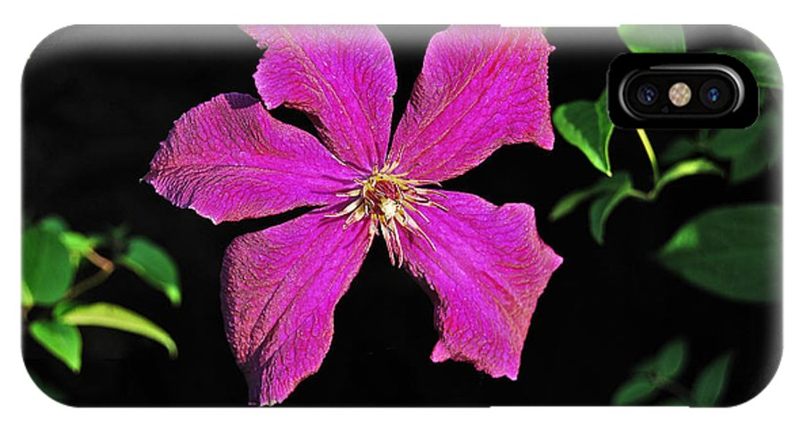 Clematis IPhone X Case featuring the photograph Clematis 2598 by Michael Peychich