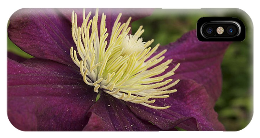 Flower IPhone X Case featuring the photograph Clematis 4000 by Michael Peychich
