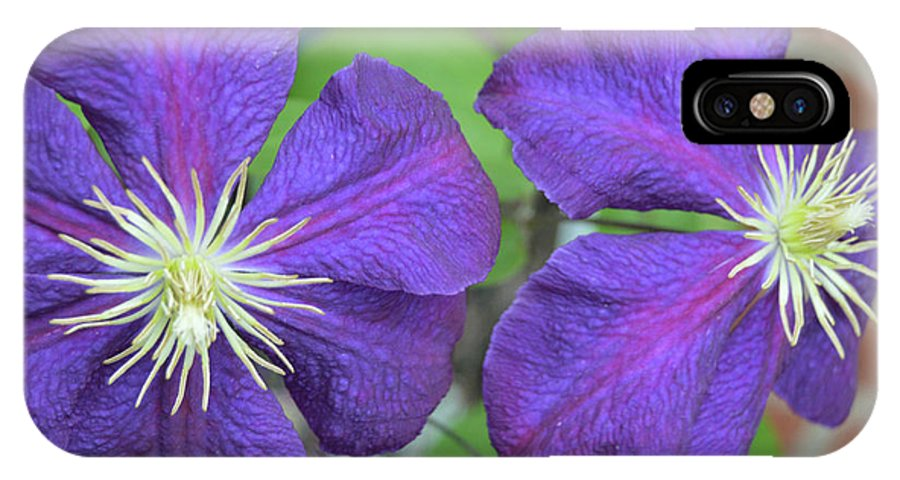 Flower IPhone X Case featuring the photograph Clematis Friends by Karen Sturgill