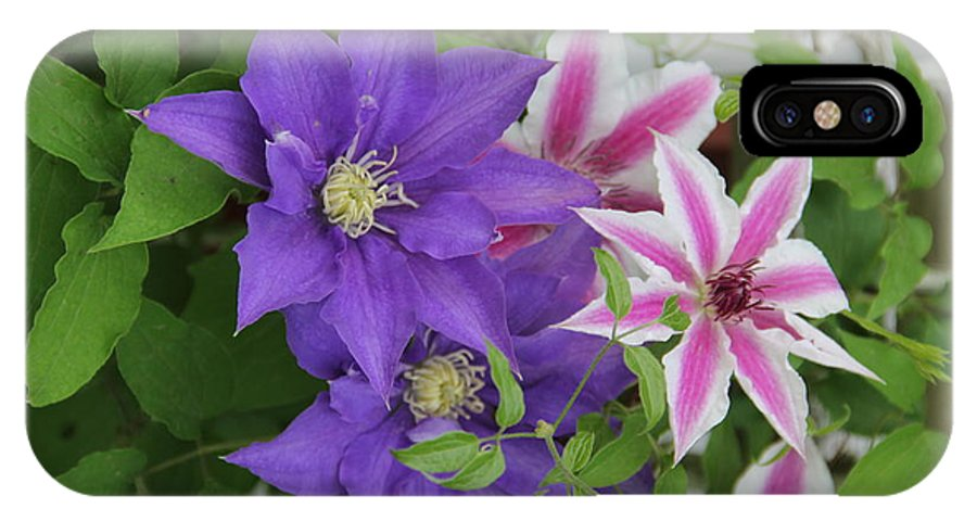 Clematis IPhone X Case featuring the photograph Clematis Purple And Pink White by Allen Nice-Webb