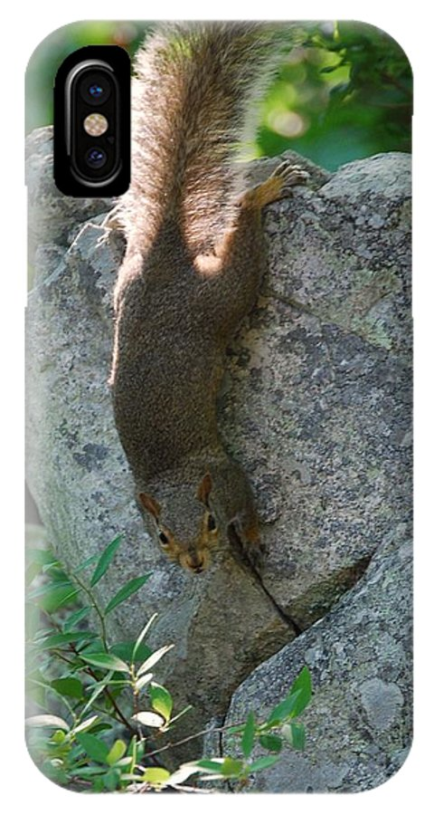 Squirrel IPhone X Case featuring the photograph Cliff Hanger by Eric Liller