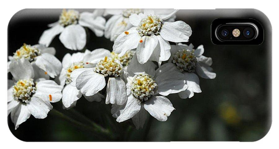 Kleine Scheidegg IPhone X Case featuring the photograph Close Up Of A Alpine Wildflower by Anne Keiser