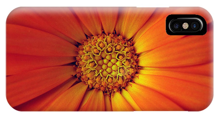 Plant IPhone X Case featuring the photograph Close Up Of An Orange Daisy by Ralph A Ledergerber-Photography