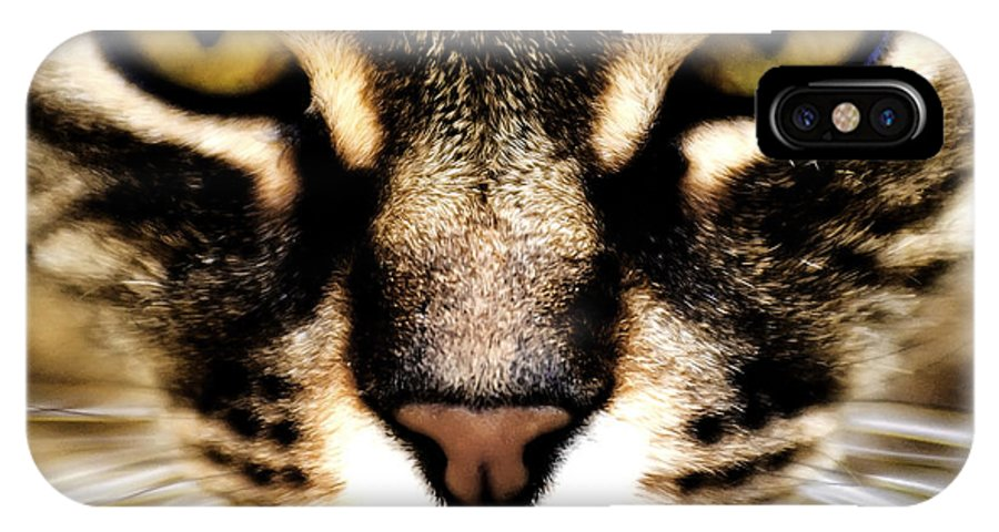 Cat IPhone X / XS Case featuring the photograph Close Up Shot Of A Cat by Fabrizio Troiani