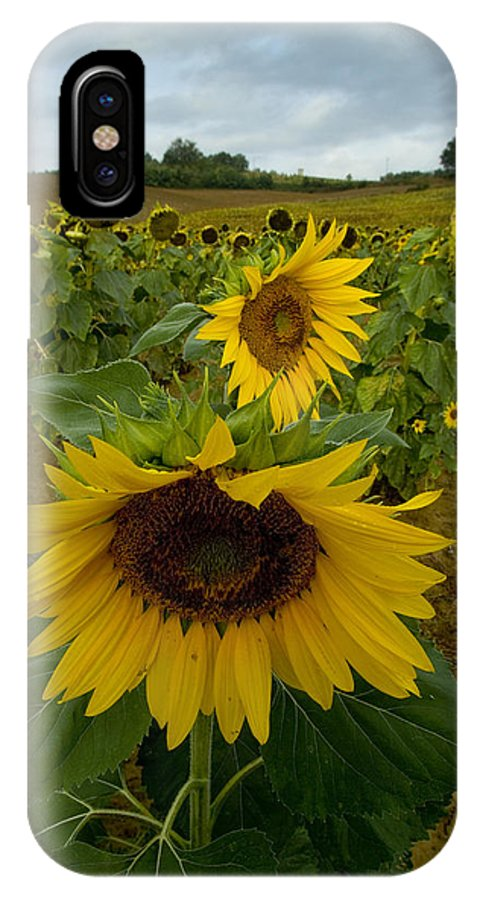 Sunflowers IPhone X Case featuring the photograph Close View Of A Sunflower At The Edge by Todd Gipstein