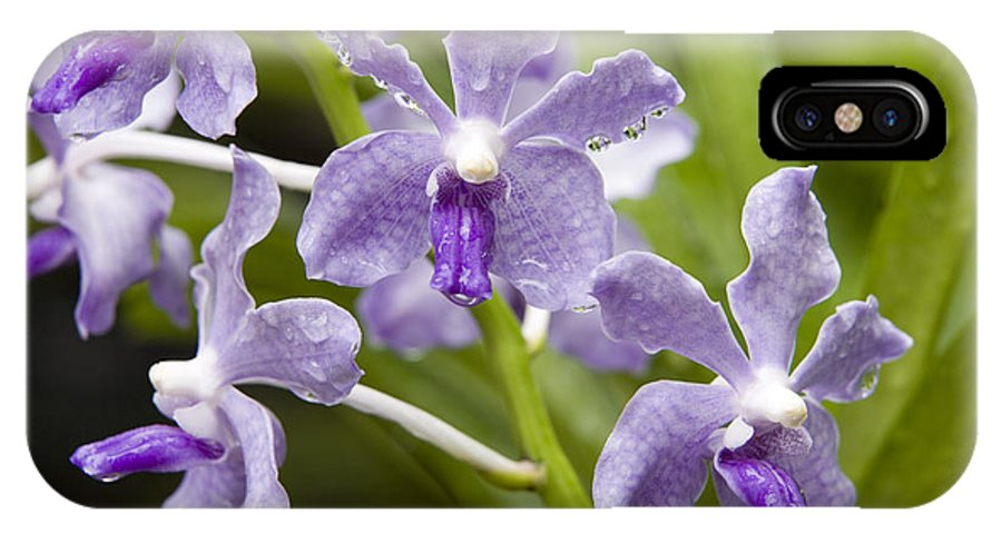 Hybrid Cultivated Orchids IPhone X Case featuring the photograph Closeup Of A Hybrid Cultivated Orchid by Tim Laman