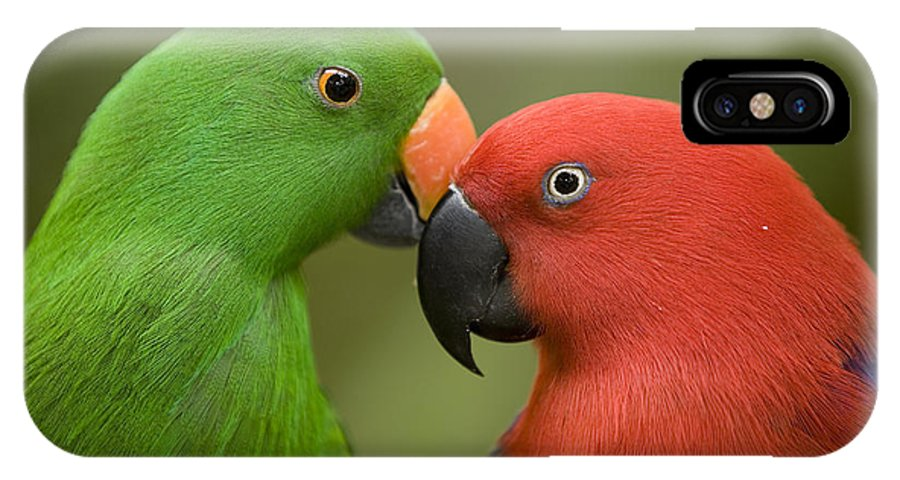 Two Animals IPhone X Case featuring the photograph Closeup Of Male And Female Eclectus by Tim Laman
