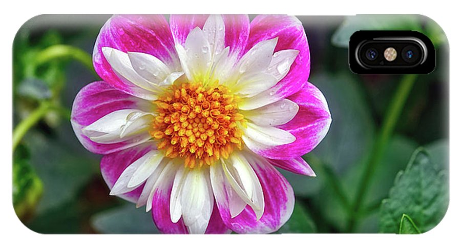 Dahlia IPhone X Case featuring the photograph Closeup View Of A Dahlia That Was In The Cesky Krumlov Castle Gardens by Richard Rosenshein