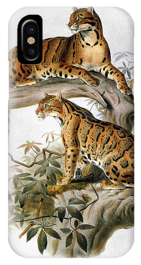 1883 IPhone X Case featuring the drawing Clouded Leopard, 1883 by Granger