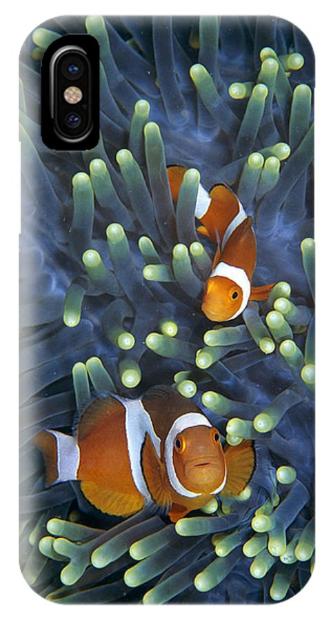 00429998 IPhone X Case featuring the photograph Clown Anemonefish Amphiprion Ocellaris by Hiroya Minakuchi