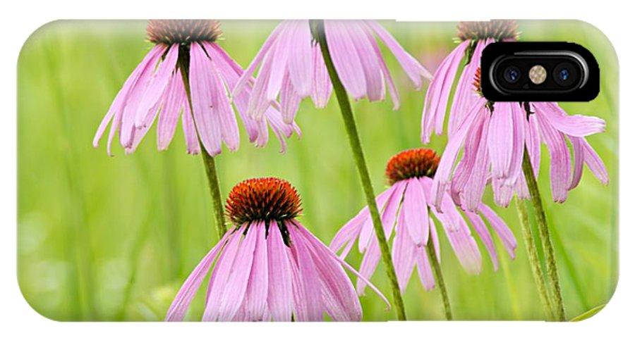 Cone Flower IPhone X Case featuring the photograph Cluster Of Cone Flowers by Larry Ricker