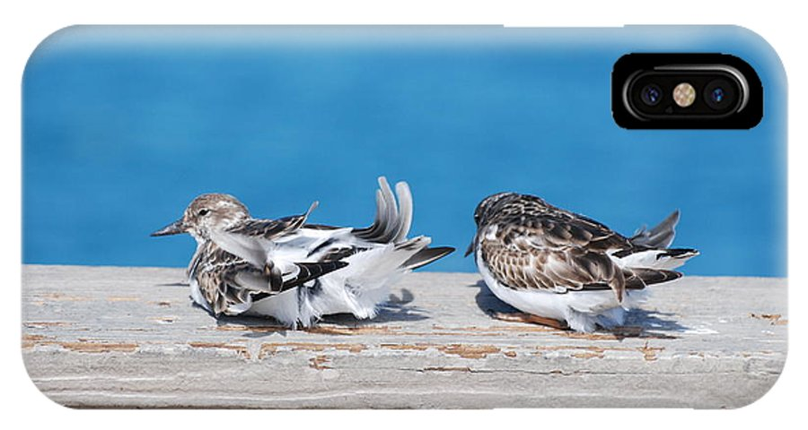 Bird IPhone X / XS Case featuring the photograph Cold Birds by Rob Hans