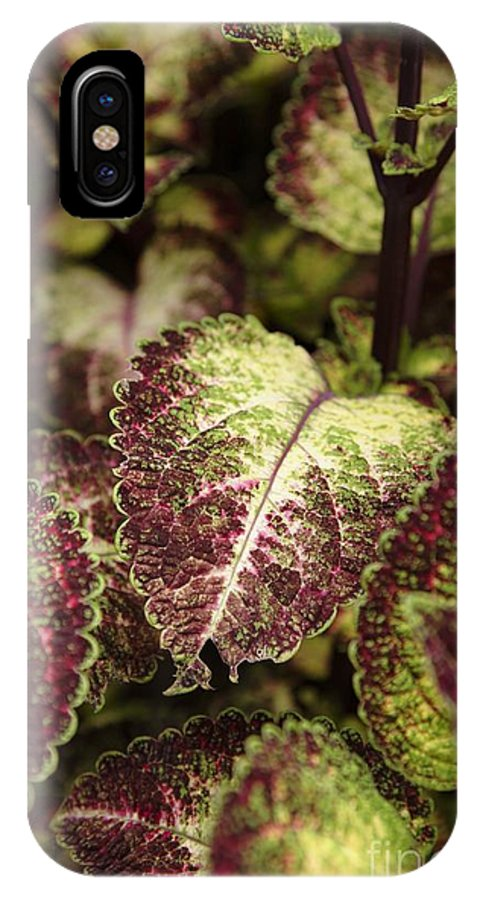 New England IPhone X Case featuring the photograph Coleus Plant by Erin Paul Donovan