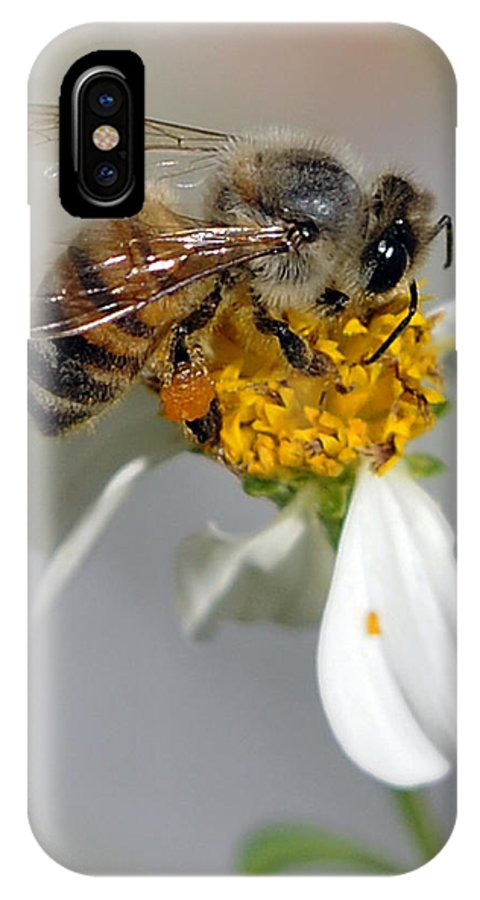 Bee IPhone X Case featuring the photograph Collections by Keith Lovejoy