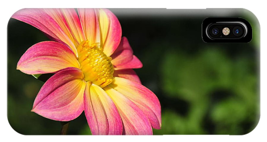 Flower IPhone X Case featuring the photograph Color Explosion by David Arment