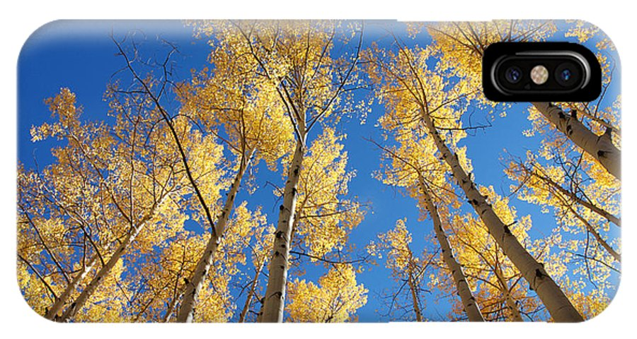 Aspen IPhone X Case featuring the photograph Colorado Aspen by Jerry McElroy