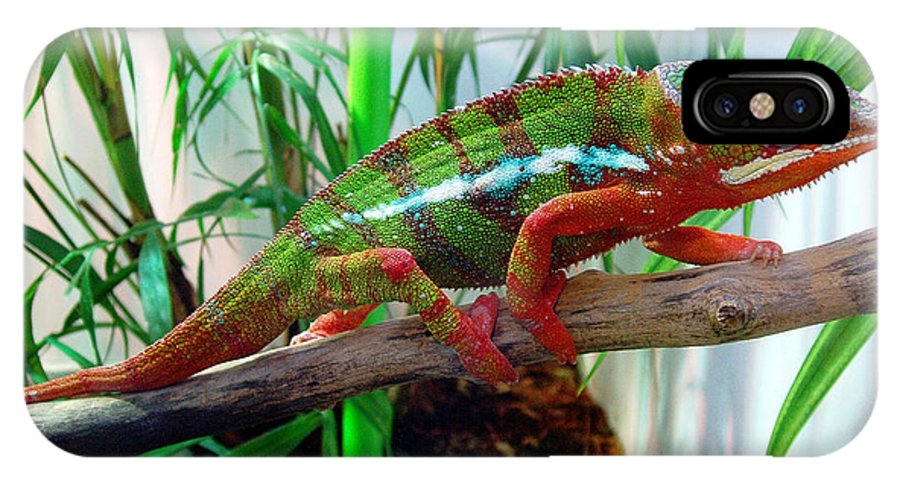 Chameleon IPhone Case featuring the photograph Colorful Chameleon by Nancy Mueller