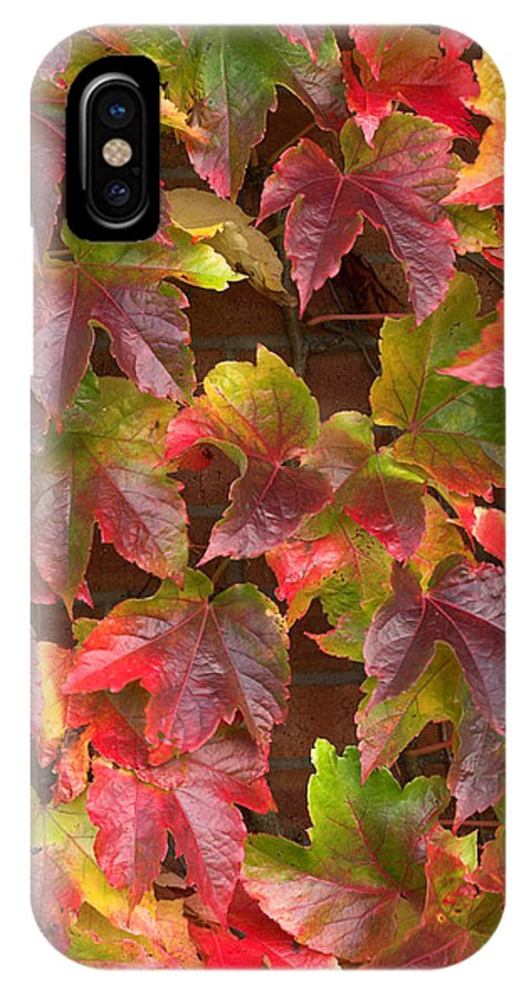 Colors IPhone X Case featuring the photograph Colorful Ivy Wall In Autumn Ireland by Pierre Leclerc Photography