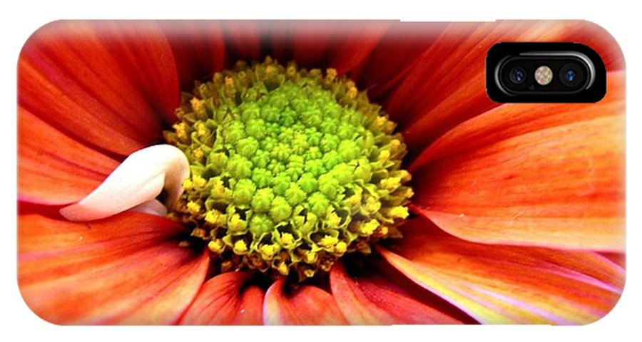 Flower IPhone X Case featuring the photograph Colorful by Rhonda Barrett