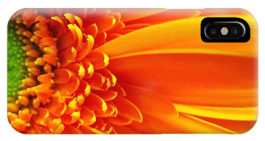 Red IPhone Case featuring the photograph Colors Galore by Rhonda Barrett
