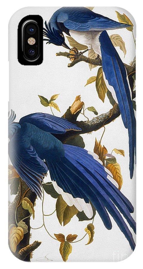 1830 IPhone X Case featuring the photograph Columbia Jay, 1830, by Granger