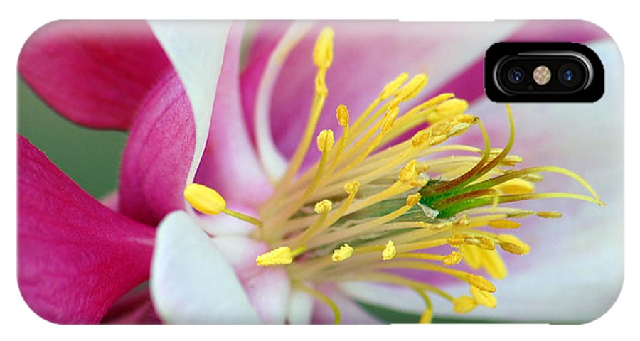Columbine IPhone Case featuring the photograph Columbine Flower 2 by Amy Fose