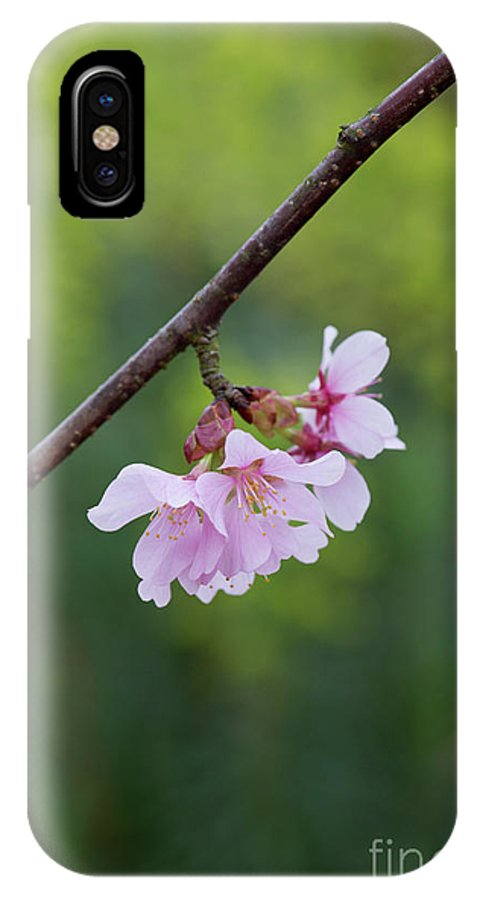 quality design 1656b 7b615 Columnar Sargent Cherry Blossom IPhone X Case
