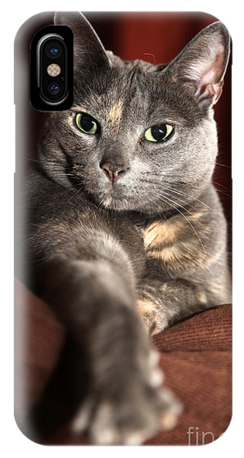 Kitty IPhone X Case featuring the photograph Come Here by Amanda Barcon