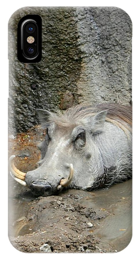 Hog IPhone X Case featuring the photograph Come On In The Waters Fine by David Dunham