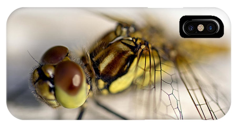 Animal IPhone X Case featuring the photograph Common Darter Dragonfly Compound Eye And Synthorax by Hugh McKean