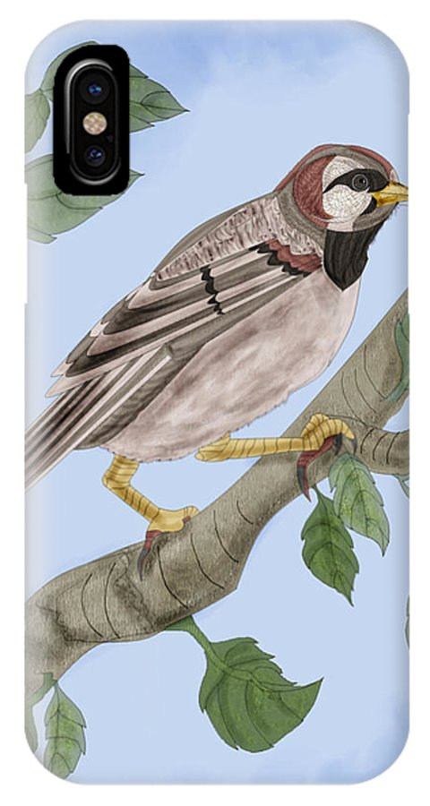 Sparrow IPhone X Case featuring the painting Common House Sparrow by Anne Norskog