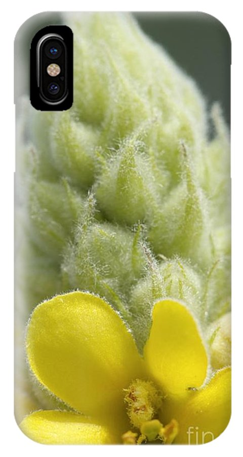 New England IPhone X Case featuring the photograph Common Mullein - New England by Erin Paul Donovan