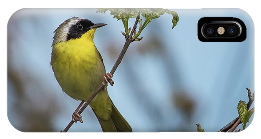 Airline Trail IPhone X / XS Case featuring the photograph Common Yellowthroat by Clifford Pugliese