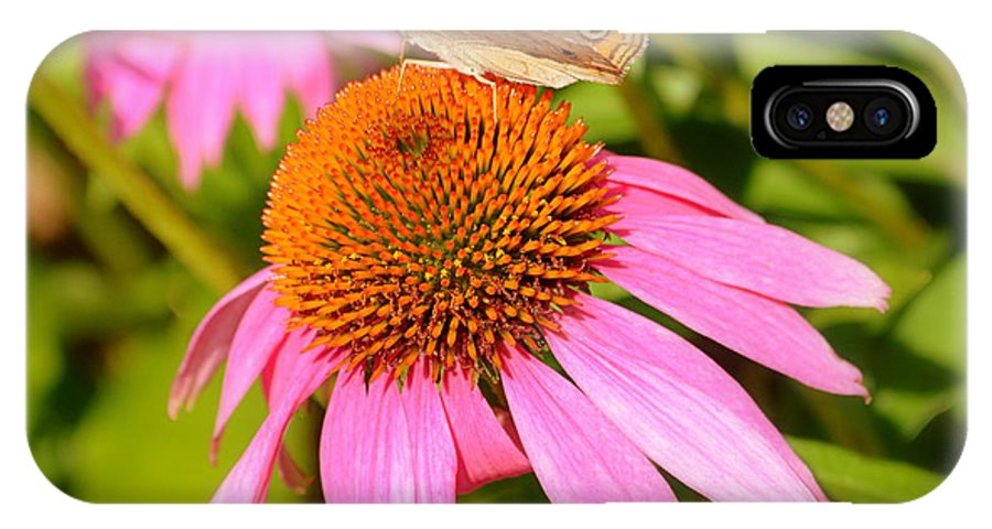 Cone Flower IPhone X / XS Case featuring the photograph Cone Flower Visitor by Linda Covino