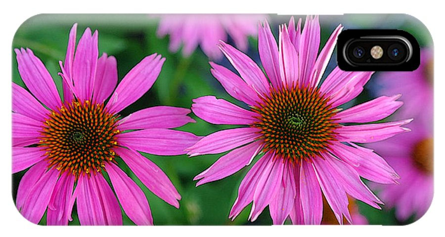 Cone Flowers IPhone X Case featuring the photograph Cone Flowers in Spring by David Bearden