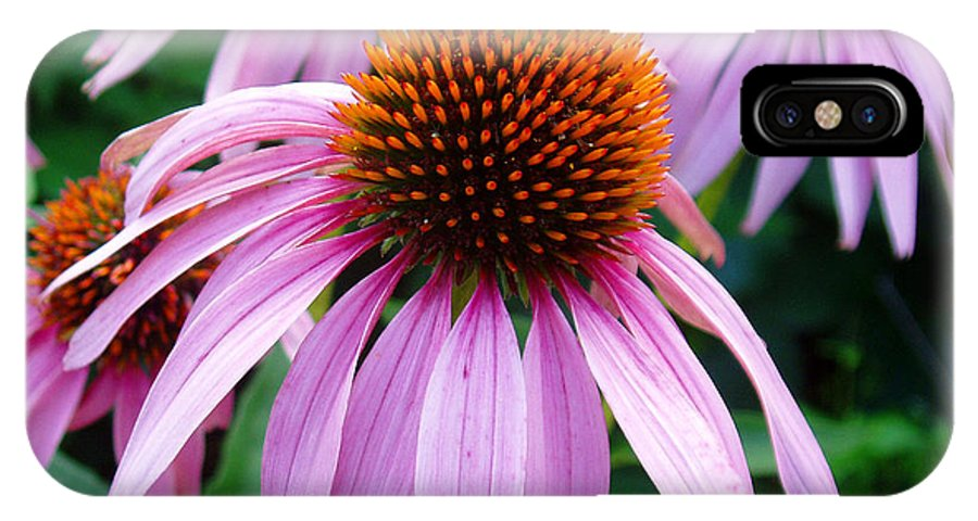 Coneflowers IPhone Case featuring the photograph Three Coneflowers by Nancy Mueller