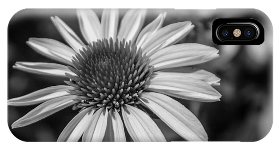 Daisy IPhone X Case featuring the photograph Conehead Daisy In Black And White by Arlene Carmel