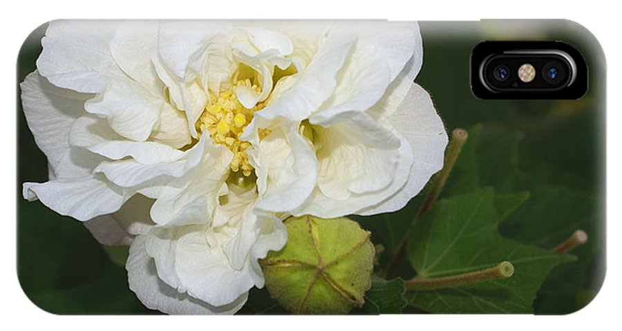 Botanical IPhone X Case featuring the photograph Confederate Rose by Debbie May