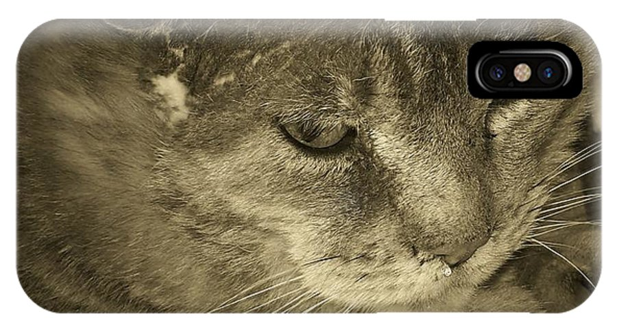 Cat IPhone X Case featuring the photograph Contemplation Of Thumbody In Sepia Tone by Deborah Montana