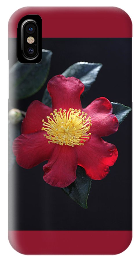 Camellia IPhone X Case featuring the photograph Cookie Cutter Camellia by Tammy Pool
