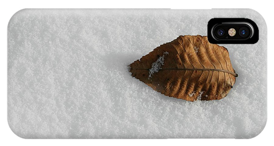 Nature IPhone X Case featuring the photograph Cool Leaf by Dylan Punke